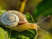 Garden Snail Lifespan